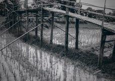 Campo de madeira do arroz da ponte preto e branco Fotografia de Stock