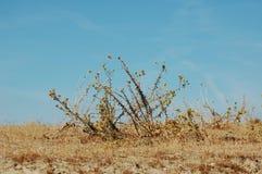 Campo de malas hierbas Fotos de archivo