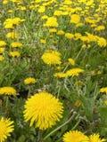 Campo de malas hierbas Fotografía de archivo libre de regalías
