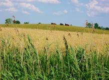 Campo de Masurian y tierra de pasto Imagenes de archivo