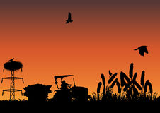 Campo de milho Imagens de Stock Royalty Free