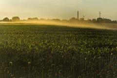 Campo de milho 2 Imagem de Stock