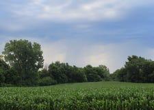 Campo de milho com céu nebuloso Fotografia de Stock