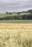 Campo de milho com windenergy - retrato Foto de Stock