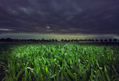 Campo de milho da noite Fotografia de Stock Royalty Free