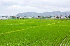 Campo de milho e cidade imagem de stock royalty free