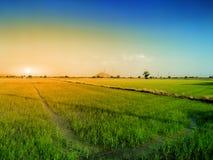 Campo de milho e fundo da noite em Tailândia Imagem de Stock Royalty Free