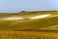 Campo de milho e vinhedos Foto de Stock Royalty Free
