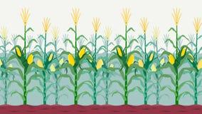 Campo de milho isolado sem emenda Imagens de Stock Royalty Free