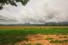 Campo de milho na montanha Tailândia Fotografia de Stock Royalty Free