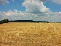 Campo de milho no verão Fotos de Stock
