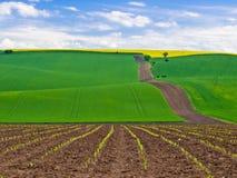 Campo de Moravia Foto de Stock