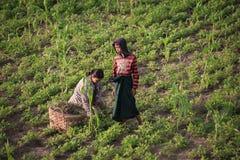 Campo de Myanmar Fotografia de Stock