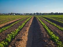 Campo de Naan dos kibutz, plantado na primavera Imagens de Stock Royalty Free