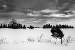 Campo de neve Imagens de Stock
