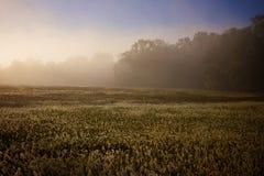Campo de niebla Fotos de archivo libres de regalías