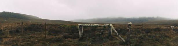 Campo de niebla en la montaña Imágenes de archivo libres de regalías