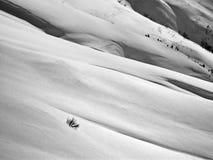 Campo de nieve Imagen de archivo libre de regalías