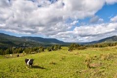 Campo de Nova Zelândia Fotos de Stock