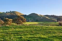 Campo de Nova Zelândia do rolamento com prados e pastos Fotos de Stock Royalty Free