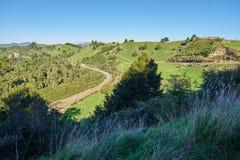 Campo de Nova Zelândia do rolamento com prados e pastos Fotos de Stock