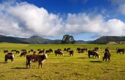 Campo de Nueva Zelandia imagen de archivo