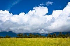 Campo de Nueva Zelandia Imagen de archivo libre de regalías