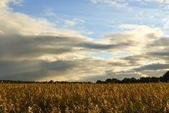 Campo de oro del otoño Fotografía de archivo libre de regalías