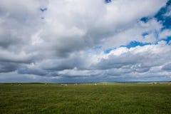 Campo de ovejas Foto de archivo libre de regalías