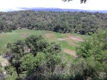 Campo de Padi Imagen de archivo