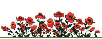 Campo de papoilas vermelhas bonitas Fotos de Stock