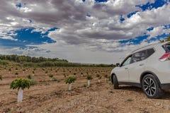 Campo de pequeños cerezos con el coche blanco imagenes de archivo