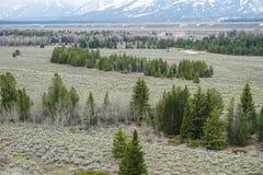 Campo de pinheiros verdes com a montanha no fundo imagens de stock royalty free