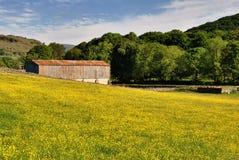 Campo de ranúnculos y del granero Fotografía de archivo libre de regalías