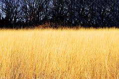 Campo de Rye Fotografia de Stock