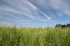 Campo de Rye Imagenes de archivo