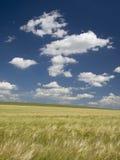 Campo de Rye Imagens de Stock