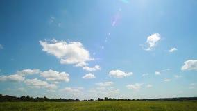 Campo de Rye en un d?a de verano soleado Campo de trigo y paisaje del verano del cielo almacen de metraje de vídeo
