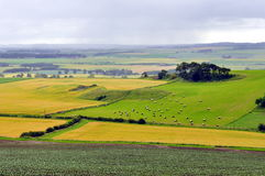 Campo de Scotland Imagens de Stock Royalty Free