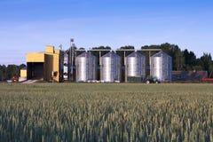 Campo de secador e de trigo de grão Imagem de Stock Royalty Free