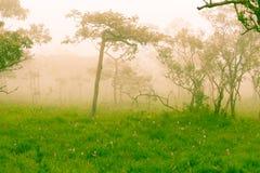 Campo de Siam Tulip imagen de archivo