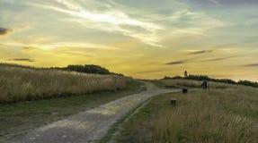 Campo de sueños con un cielo de oro foto de archivo libre de regalías