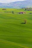 Campo de Toscana cerca de Pienza, Italia imágenes de archivo libres de regalías