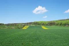 Campo de trigo. Fotografía de archivo libre de regalías