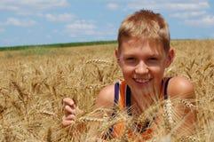 Campo de trigo imagem de stock royalty free