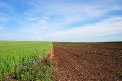 Campo de trigo. Fotos de archivo