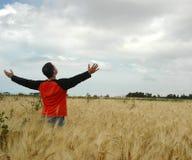 Campo de trigo foto de stock