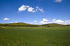 Campo de trigo. Foto de archivo