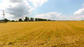 Campo de trigo amarelo com estrada e carros video estoque