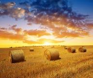 Campo de trigo após a colheita com pacotes da palha Fotos de Stock Royalty Free